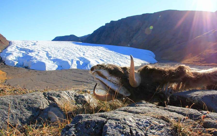 Arctic-Scranton-otu_img