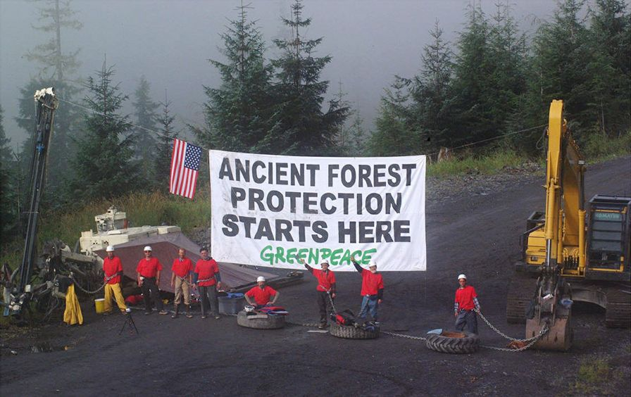 Greenpeace-logging-forest-protest-ap-img