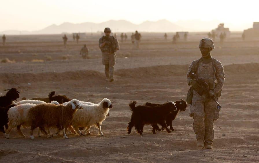 US soldier sheep Afghanistan
