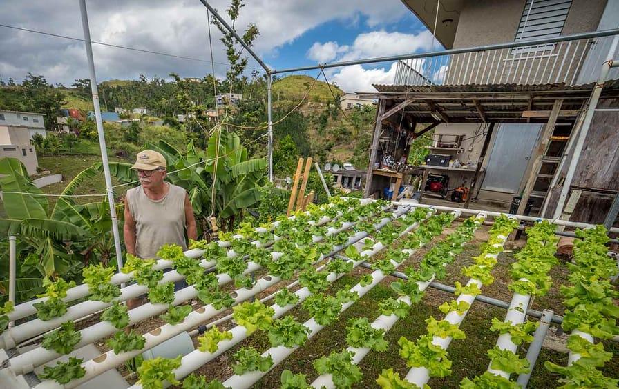 Hyroponic Farm in Puerto Rico