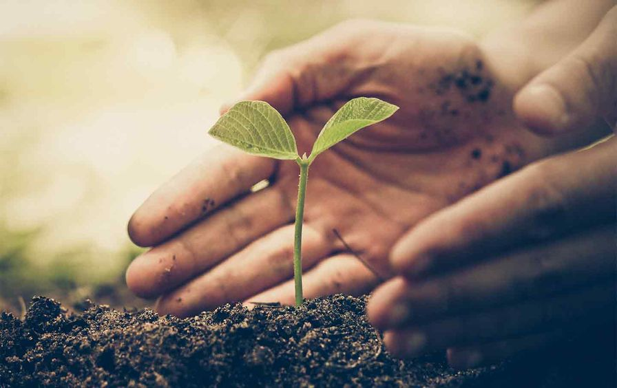 plant-growing-hands-dirt-ss-img