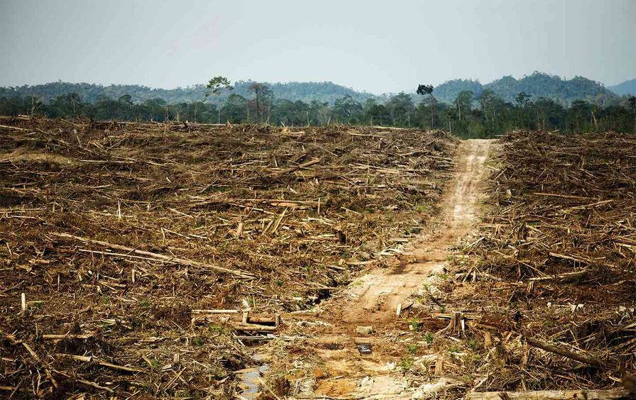 rainforest-deforestation-kalimantan-boreno-cv-img