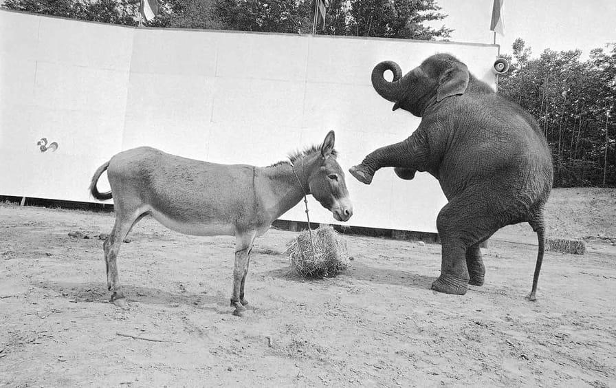 Lemann-Donkeys&Elephants-AP_img