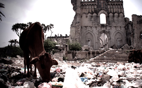 Livestock eat trash near the ruins of a cathedral in central Mogadishu. The once-beautiful city has been devastated by two decades of war.