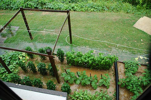 Even the Best Western in Yazoo City, where I stayed during my visit, has its own vegetable garden out in back. Click to return to this article.