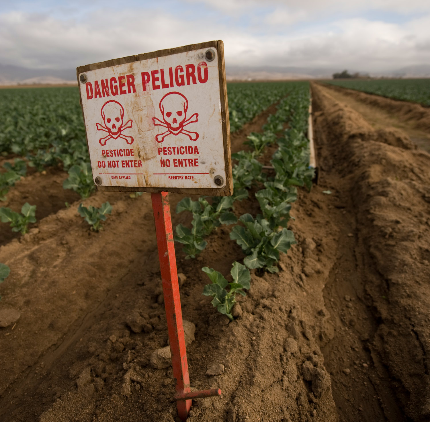 Warning-Signs-How-Pesticides-Harm-the-Young-Brain