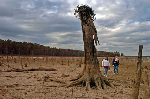 The Panther Creek area of Durham County, North Carolina, is drying up. Tom Engelhardt explores the implications of one of the worst global droughts in history. As we focus on economic recovery, are we ignoring a greater threat for which there's no clear set of remedies? (AP Images)