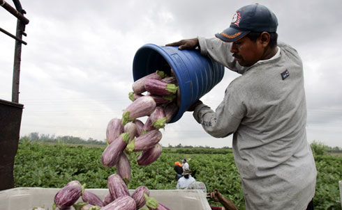 Every year, between one and three million migrant workers tend American farms, moving across the country to follow seasonal crops (PDF). In Florida, farmworkers labor 10 to 12 hours a day, collecting some 4,000 pounds of tomatoes to earn Florida's minimum wage. What's worse, some of these impoverished workers are forced into involuntary servitude.
