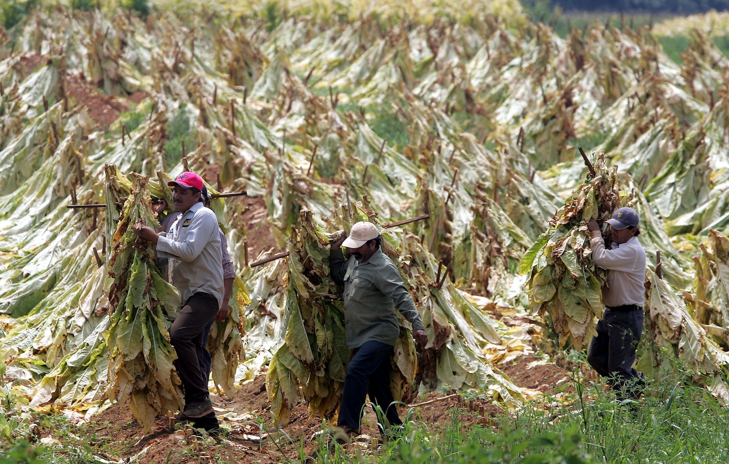 Tobacco-Workers
