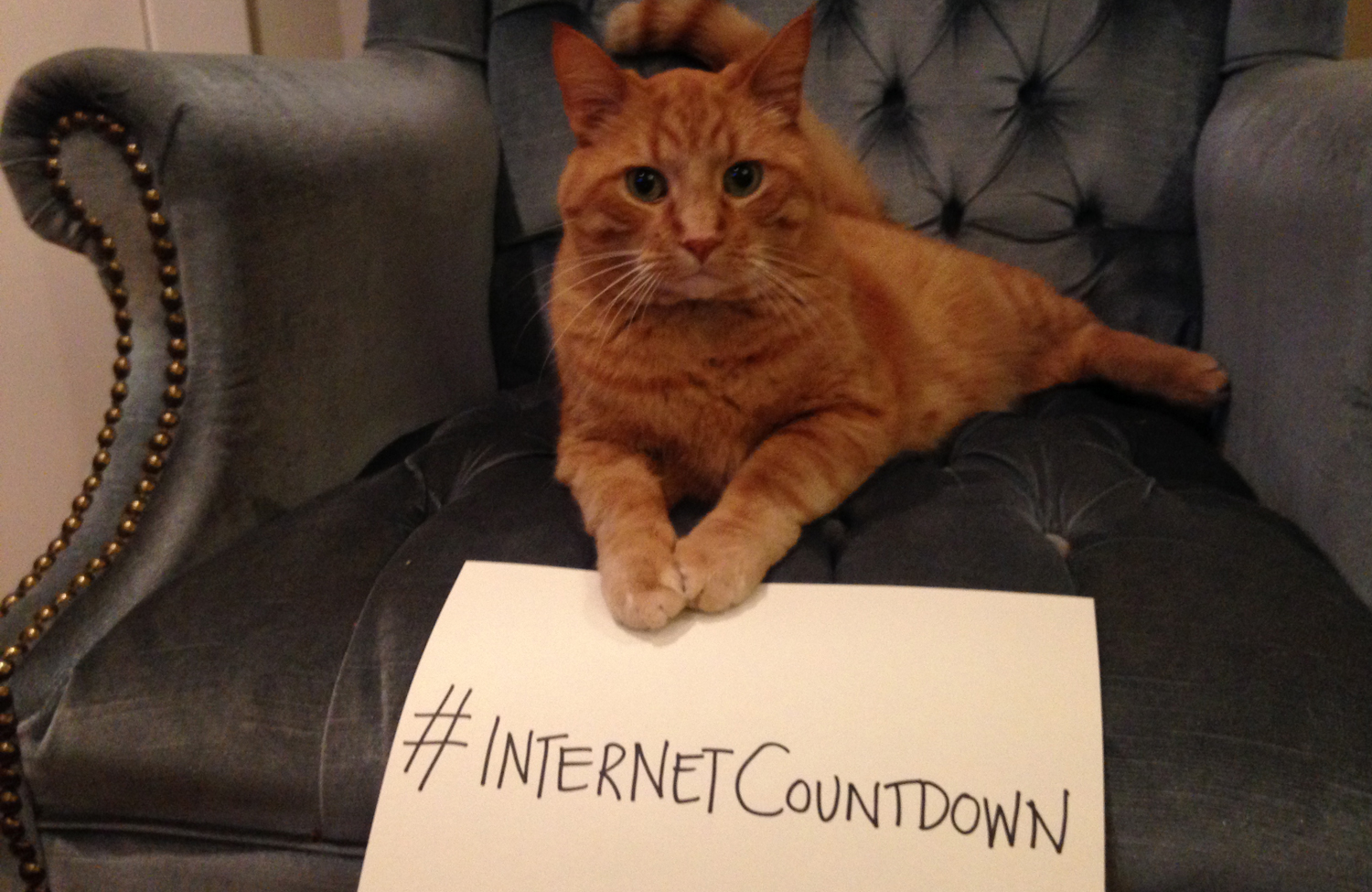 net-neutrality-cat