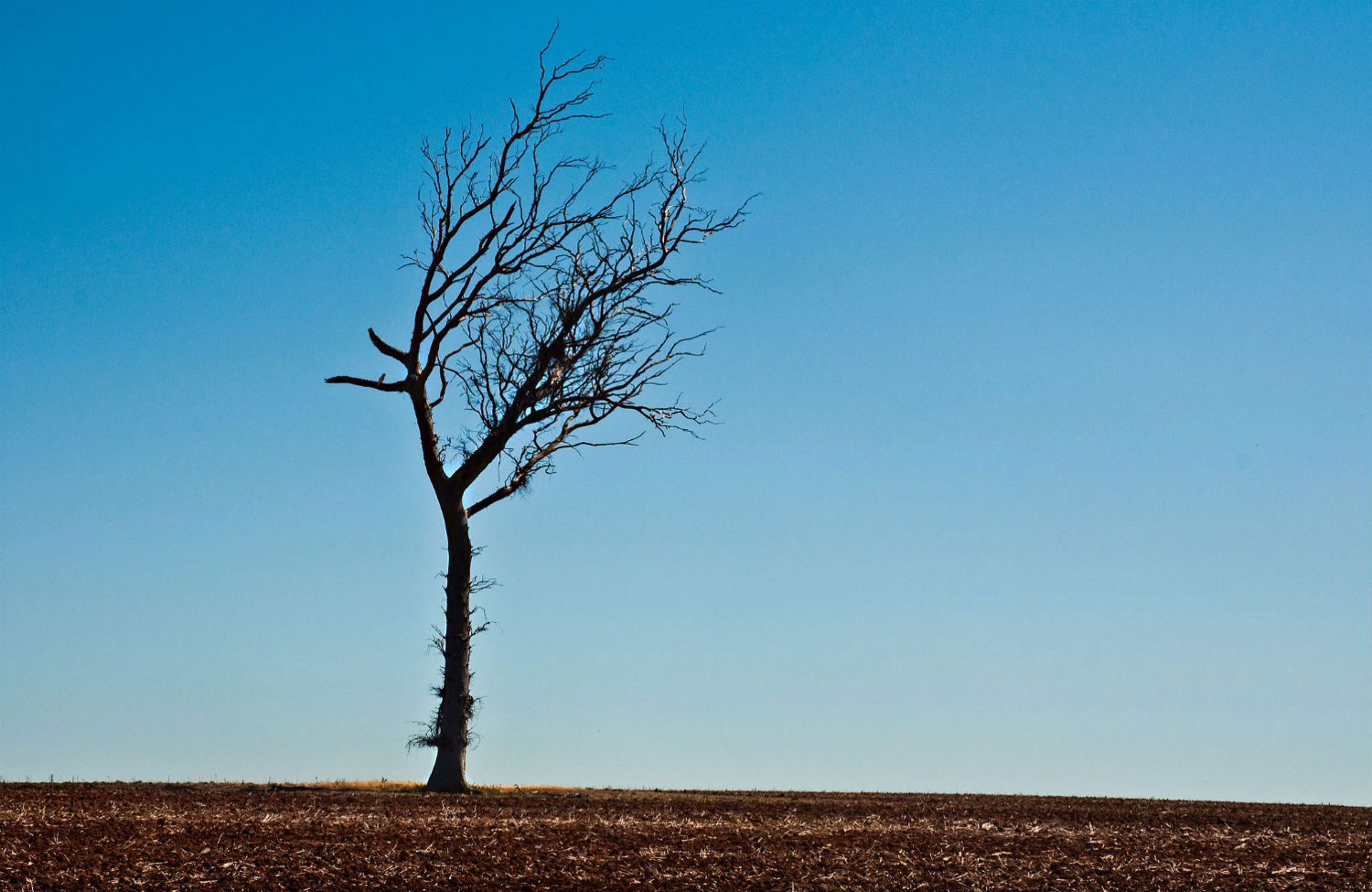 Three-Poems-to-Get-You-Through-the-Drought