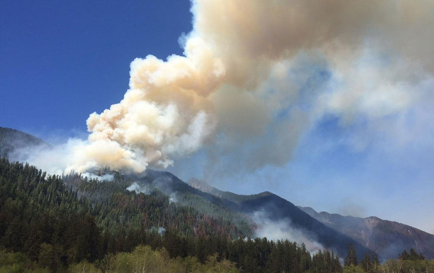 the wettest rainforest in the united states has gone up in flames