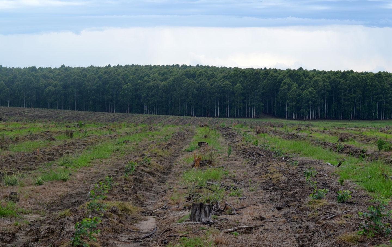 ferber_tree_farm_img
