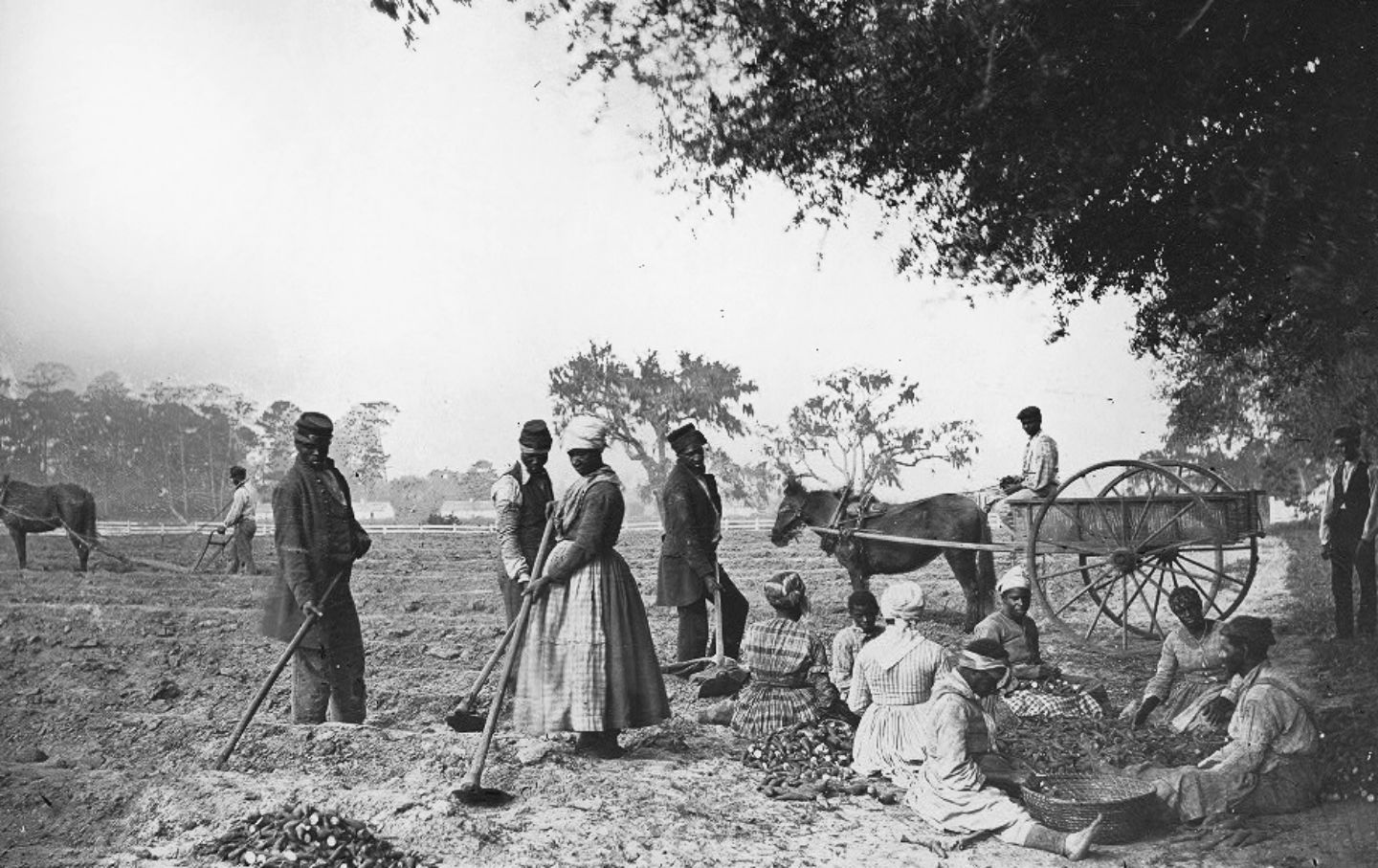 Slaves on a South Carolina plantation planting sweet potatoes, circa 1862.  (Library of Congress)