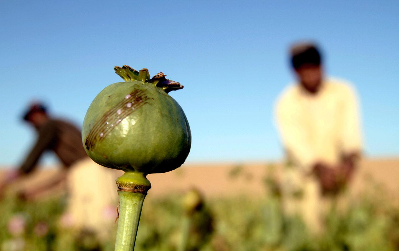 Afghanistan_Opium_taliban_AP_img