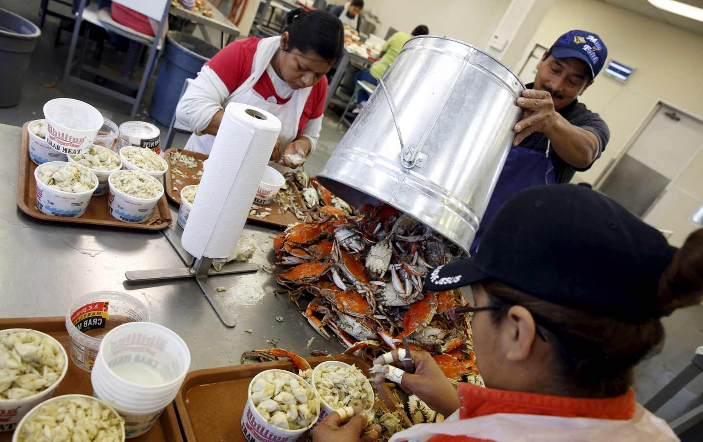 Guestworkers processing crabs
