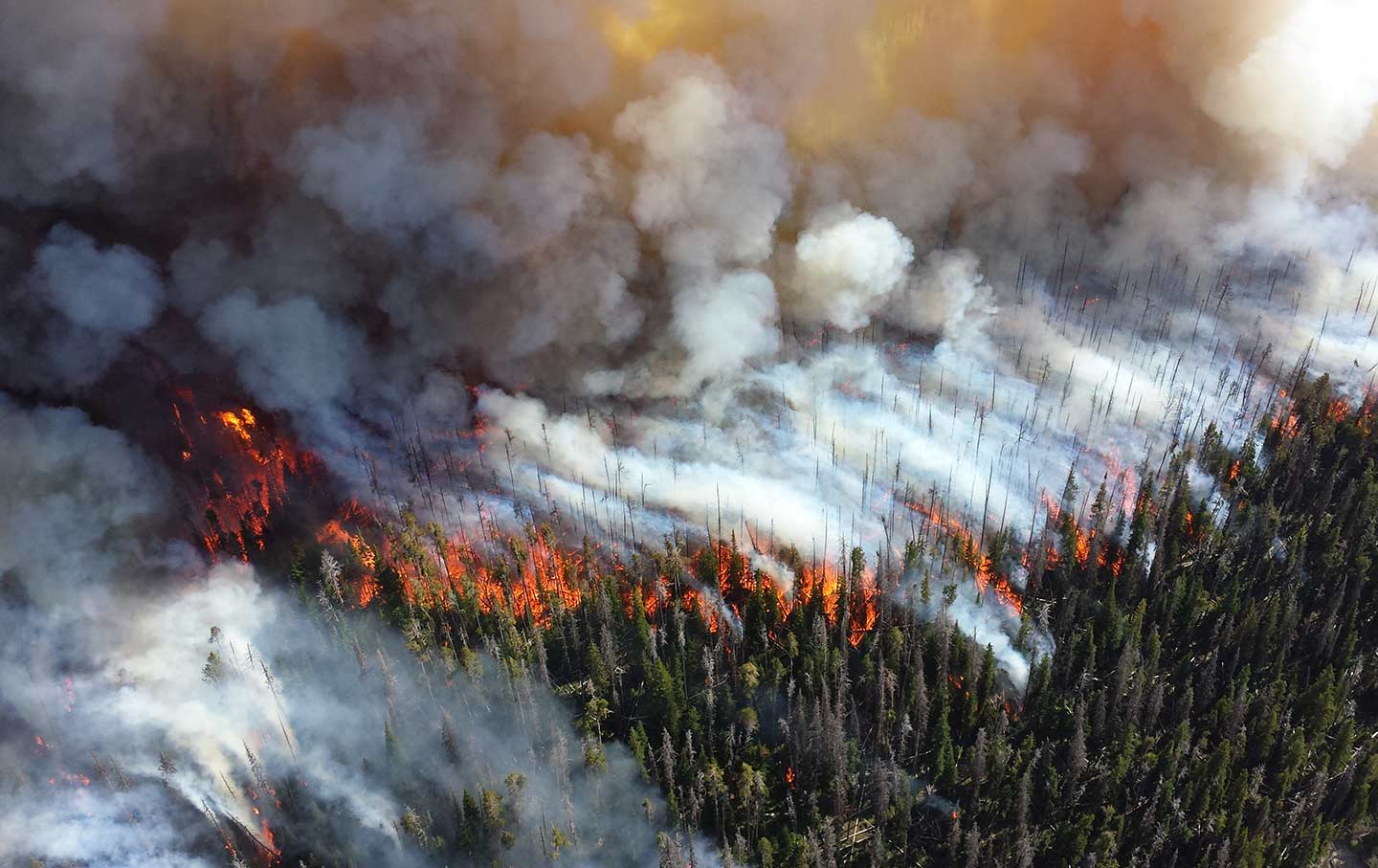 A Wildfire Engulfs Parts Of Yellowstone National Park In 2013. (Mike  Lewelling / National Park Service)