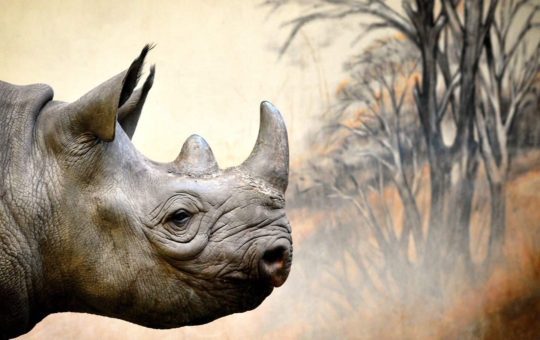 Rhino Czech Zoo