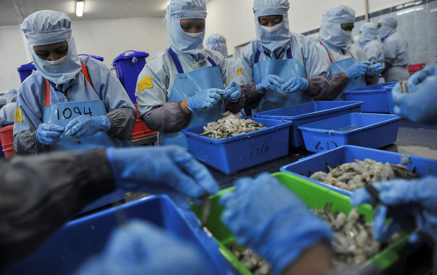 Workers sort shrimp for processing at the PT Kelola Mina Laut seafood processing facility in Gresik, East Java