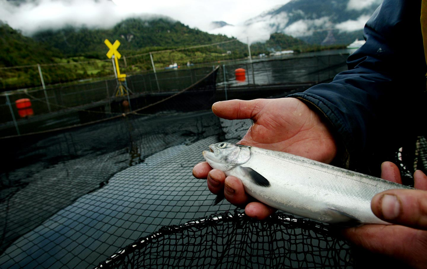 Salmon Farms Chile