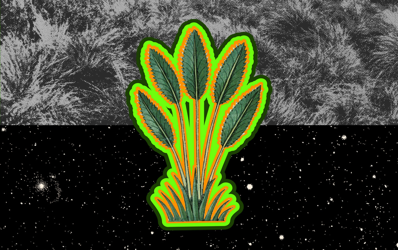 universal-plant3