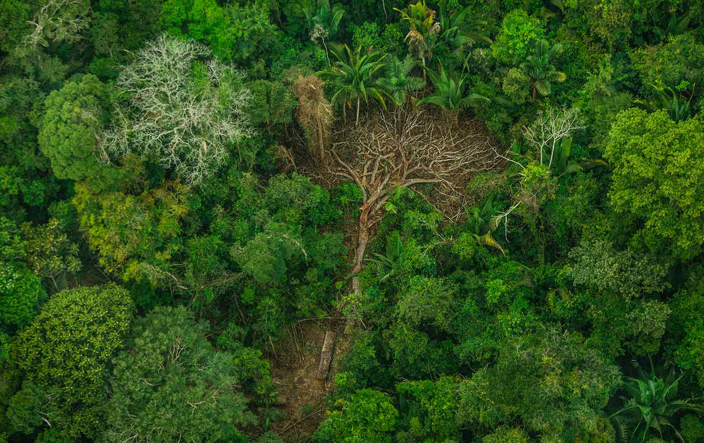 deforestation-indigenous-brazil-greenpeace-img