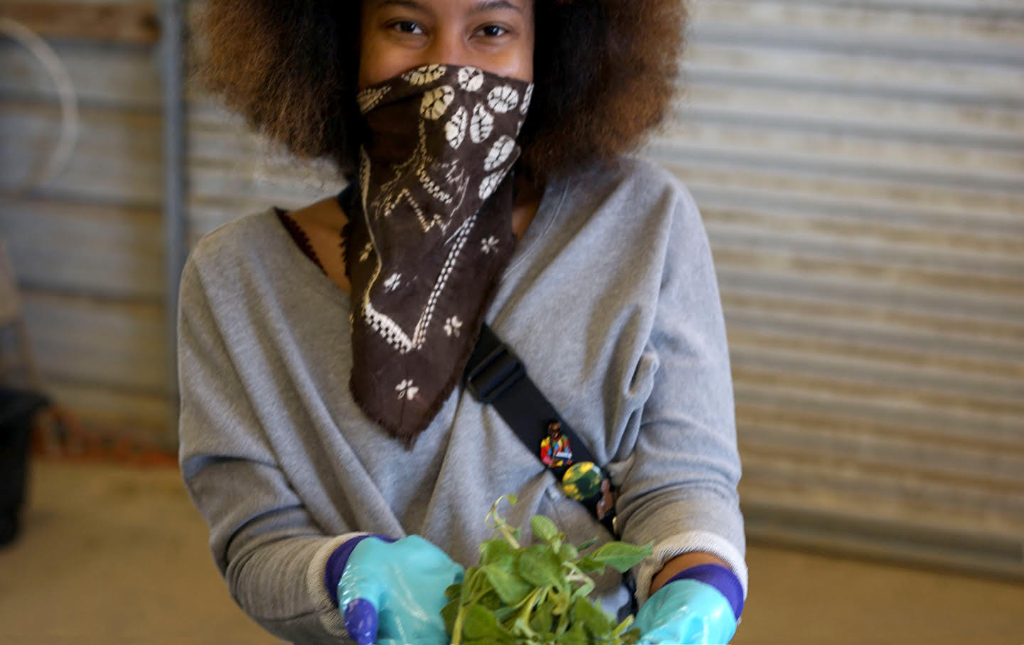 A farmer wearing gloves and a bandana as a face cover holds a mint plant.