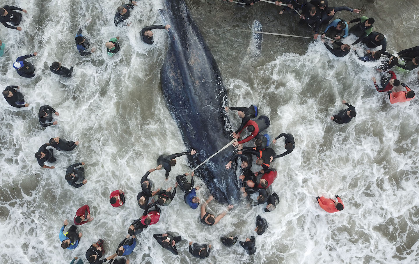 TOPSHOT-ARGENTINA-WHALE-STRANDING