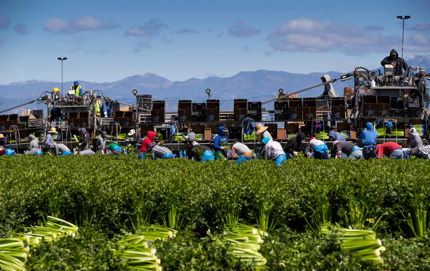 agriculture-workers-farm-california-gty-img