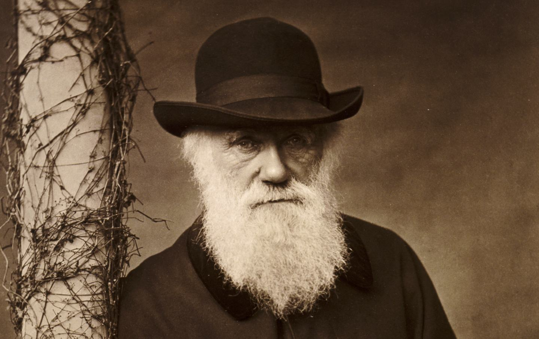darwin-beard