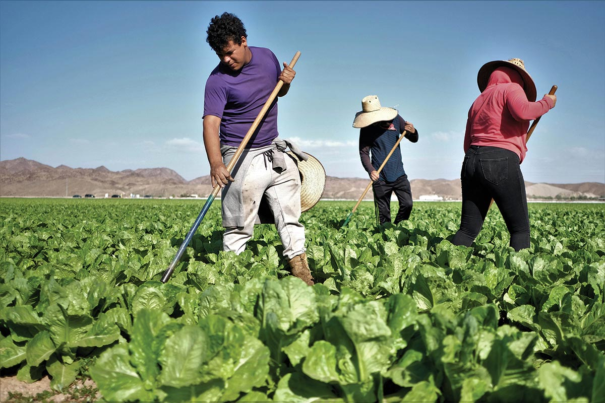 VIDEO Mónica Ramírez Talks About the Severe Lack of Workplace Protections for Farmworkers
